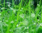 Інноваційні рішення в захисті рослин