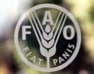 ФАО: группа по проблемам глобальной миграции провела совещание