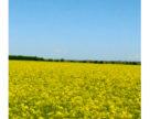 Посівам допікає посуха, а фермерам – рейдери
