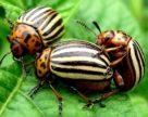 Біопрепарати – альтернативний захист сільськогосподарських культур від хвороб та шкідників в органічному землеробстві