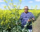 Урожай рапса в ЕС в этом сезоне будет на 1 млн тонн ниже