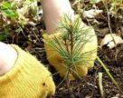 В Україні не лише вирубують ліси, але й намагаються їх відтворити