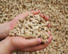 Некоторые продовольственные отходы в ЕС будут считаться компонентами комбикормов