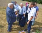 В Україні картопля селекції НААН займає 90% площ