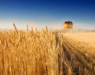 В этом году Аргентина ожидает рекордный урожай пшеницы
