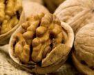 Поповнення ринку сортів волоського горіху в Україні