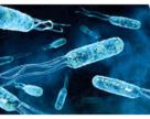 Агрономически полезная микрофлора. Как это работает? Часть1