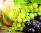 В каком состоянии виноградники южной Украины?