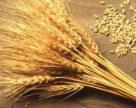 Ринок отримає новий стандарт на пшеницю в травні 2019 року