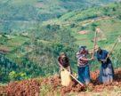 ОСР построит новый завод по производству удобрений в Руанде