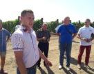 Виноградарі Запоріжжя у пошуках каналів збуту продукції