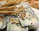 В Украине увеличились разница между закупочными и экспортными ценами на зерно