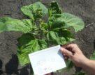 Типичные проблемы при внесении гербицидов