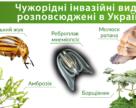 В Мінприроди напрацьовують план боротьби з неконтрольованим проникненням та розповсюдженням інвазійних чужорідних видів