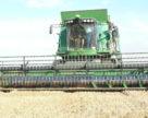 Урожай зерновых в Крыму сократился почти вдвое