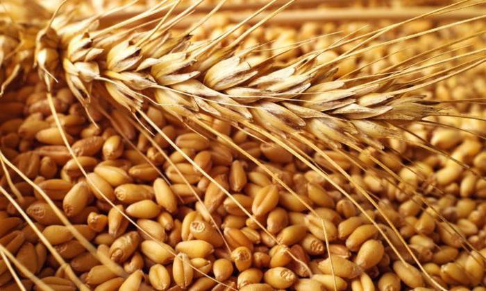 Низкая себестоимость российского зерна таит угрозу для фермеров Америки