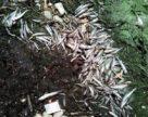 Масовий замор риби пестицидами