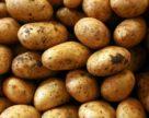 Новая технология повысила урожайность и устойчивость сельскохозяйственных культур