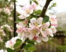 В Ставропольском крае осваивают новые методы защиты растений