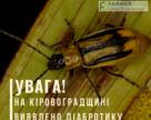 На Кіровоградщині виявлено діабротику, або західного кукурудзяного жука