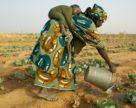 В Конго будет построен крупный завод по производству удобрений