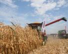 Аграрии Украины собрали более 40 млн. тонн зерна