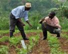K   S укрепляет позиции в Африке