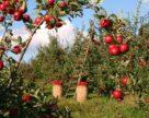 День саду від компанії «БТУ-Центр» відбудеться 5 вересня
