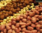 Особливості зберігання бульб насіннєвої картоплі