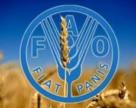 Співробітництво з ФАО формує аграрну політику України