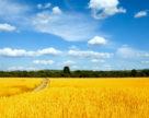 Украина не экспортирует азотные удобрения уже два месяца подряд