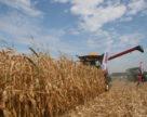 Украина и Китай договорились об увеличении поставок украинского зерна