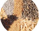 Забезпечення аграріїв насіннєвим матеріалом необхідне за будь-яких умов