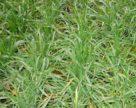 Шкідники і хвороби українських полів