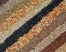 Еволюція сортових рослинних ресурсів
