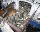 Велике рибне переселення у Південному Бузі