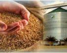Украинский зерновой рекорд продолжает расти
