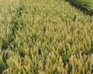 Канадские фермеры могут столкнуться с налогом на семена