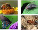 В Швейцарии обеспокоены сокращением количества насекомых