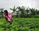 В Конго будут значительно увеличены месторождения сильвинита