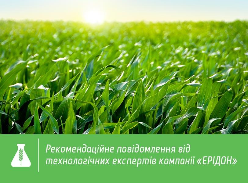 При виборі гібриду кукурудзи в першу чергу слід враховувати особливості  природно-кліматичної зони 9ed58f28cbc8b