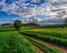 Для проведення всього комплексу заходів захисту рослин від шкідливих організмів з початку року в Україні використано 39,5 тис. тонн пестицидів і біопрепаратів