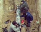ДП «Укрхімтрансаміак» почав обстеження стану магістралі аміакопроводу