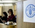 Фосфор без кадмия: «ФосАгро» заручилась поддержкой FAO