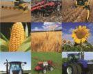 Потенциал производства зерновых и масличных в Украине около 92 млн тонн