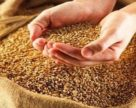 Египет закупил 60 тыс. т украинской пшеницы
