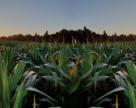 Ключі до урожаю: рідкі стартові добрива по-українськи