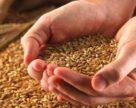 Уряд затвердив критерії, за якими оцінюється ступінь ризику від провадження діяльності у сфері охорони прав на сорти рослин