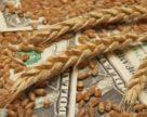 Миколаївщина стала провідним експортером аграрної продукції