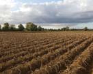 Запрет диквата бросает вызов британским картоплеводам